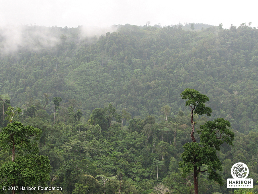 Manobo tribe shows why forests should be valued - The